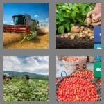 cheats-4-pics-1-word-7-letters-harvest-9666454