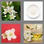 cheats-4-pics-1-word-7-letters-jasmine-6787891