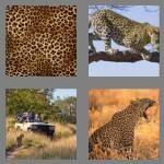 cheats-4-pics-1-word-7-letters-leopard-7138819