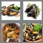 cheats-4-pics-1-word-7-letters-mussels-5498743