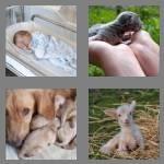 cheats-4-pics-1-word-7-letters-newborn-4322096
