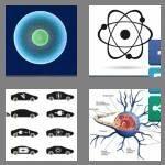 cheats-4-pics-1-word-7-letters-nucleus-8416735