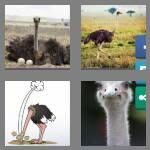 cheats-4-pics-1-word-7-letters-ostrich-9629545