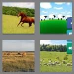 cheats-4-pics-1-word-7-letters-pasture-5085782