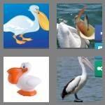 cheats-4-pics-1-word-7-letters-pelican-1049749