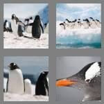cheats-4-pics-1-word-7-letters-penguin-9087352