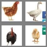 cheats-4-pics-1-word-7-letters-poultry-6751689