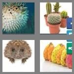 cheats-4-pics-1-word-7-letters-prickly-4414744