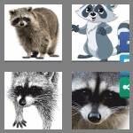 cheats-4-pics-1-word-7-letters-raccoon-5381321
