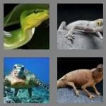 cheats-4-pics-1-word-7-letters-reptile-9126898