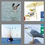 cheats-4-pics-1-word-7-letters-seagull-9097127
