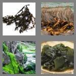cheats-4-pics-1-word-7-letters-seaweed-8712739
