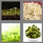 cheats-4-pics-1-word-7-letters-sprouts-9269167