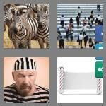 cheats-4-pics-1-word-7-letters-striped-5825537