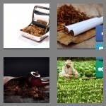 cheats-4-pics-1-word-7-letters-tobacco-4019065