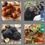 cheats-4-pics-1-word-7-letters-truffle-3414894