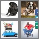cheats-4-pics-1-word-7-letters-unusual-4078994