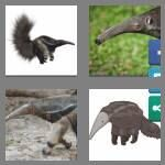 cheats-4-pics-1-word-8-letters-anteater-7080759