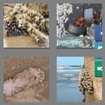 cheats-4-pics-1-word-8-letters-barnacle-3607937
