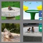 cheats-4-pics-1-word-8-letters-birdbath-3250762