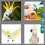 cheats-4-pics-1-word-8-letters-cockatoo-2813462