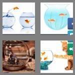 cheats-4-pics-1-word-8-letters-fishbowl-5531709