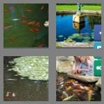 cheats-4-pics-1-word-8-letters-fishpond-5261936