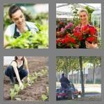 cheats-4-pics-1-word-8-letters-gardener-3920726