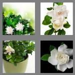 cheats-4-pics-1-word-8-letters-gardenia-3940362