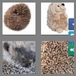 cheats-4-pics-1-word-8-letters-hedgehog-1668903