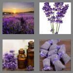 cheats-4-pics-1-word-8-letters-lavender-2144193