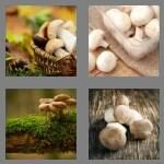 cheats-4-pics-1-word-8-letters-mushroom-4342436