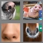 cheats-4-pics-1-word-8-letters-nostrils-9819952