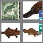 cheats-4-pics-1-word-8-letters-platypus-3665367