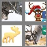 cheats-4-pics-1-word-8-letters-reindeer-7996424
