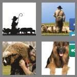 cheats-4-pics-1-word-8-letters-shepherd-5334074