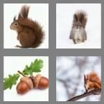 cheats-4-pics-1-word-8-letters-squirrel-7969585