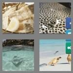 cheats-4-pics-1-word-8-letters-stingray-7718682