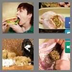 cheats-4-pics-1-word-8-letters-stuffing-4205330
