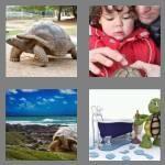 cheats-4-pics-1-word-8-letters-tortoise-1415402