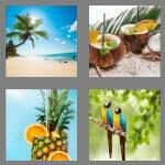 cheats-4-pics-1-word-8-letters-tropical-3854759