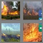 cheats-4-pics-1-word-8-letters-wildfire-4144596