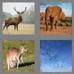 cheats-4-pics-1-word-8-letters-wildlife-6062581