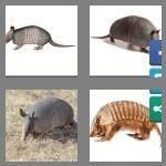cheats-4-pics-1-word-9-letters-armadillo-6729678