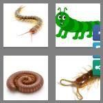 cheats-4-pics-1-word-9-letters-centipede-1529127
