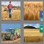 cheats-4-pics-1-word-9-letters-cornfield-4505651