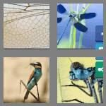cheats-4-pics-1-word-9-letters-dragonfly-5203156