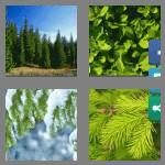cheats-4-pics-1-word-9-letters-evergreen-8518281