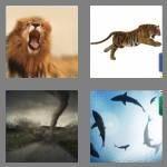cheats-4-pics-1-word-9-letters-ferocious-7042285