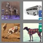 cheats-4-pics-1-word-9-letters-greyhound-7280868